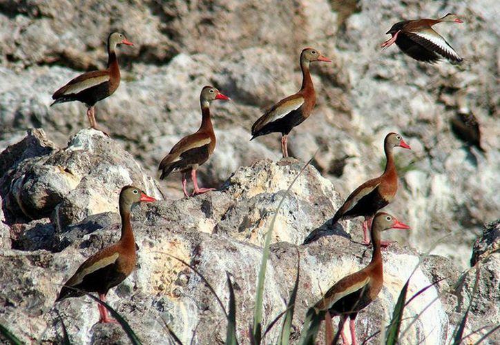 La Comisión Nacional de Áreas Naturales Protegidas anunció la reapertura de la Playa del Amor, en Nayarit. (Notimex)