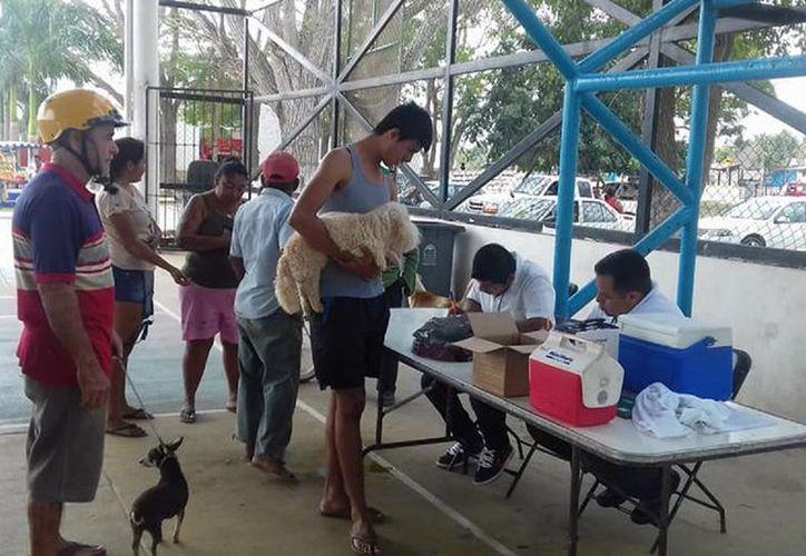 El pasado fin de semana, vacunaron un total de 458 canes y 36 gatos en Bacalar, (Javier Ortiz/SIPSE)