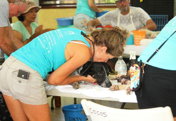 Hay una mayor cantidad de personas que han acudido con sus mascotas a esterilizarla. (Octavio Martínez)