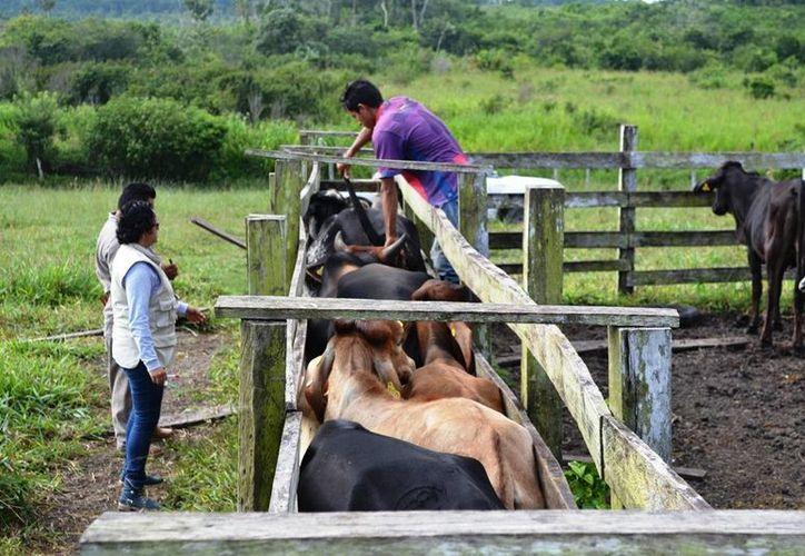 El futuro de las campañas de sanidad de Quintana Roo hasta el momento permanece incierto. (Edgardo Rodríguez/SIPSE)