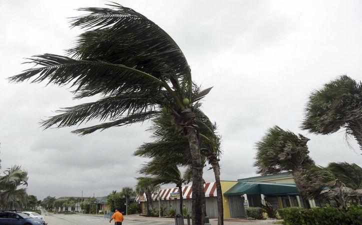 Los vientos asociados al huracán 'Matthew' arquean palmeras en Vero Beach, Florida. (AP/Lynne Sladky)