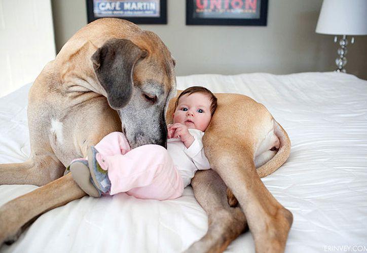 Los bebés de familias que tienen una mascota, poseen más microbios vinculados con menos alergias y riesgos de obesidad que aquellos que no. (Contexto)