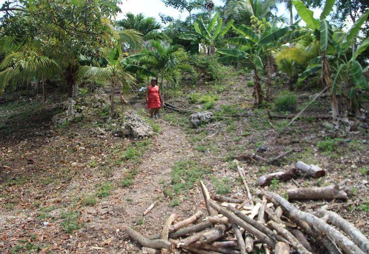 El abandono de las actividades del campo ha mermado la productividad y la calidad de vida en 70% de las comunidades de Bacalar. (Carlos Castillo/SIPSE)