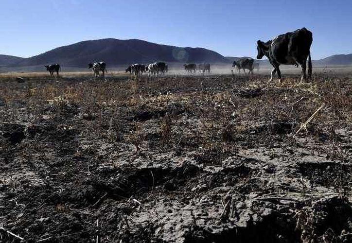Una de las ventajas de abatir la sequía es que desaparece la dependencia alimentaria. (Notimex/Foto de contexto)