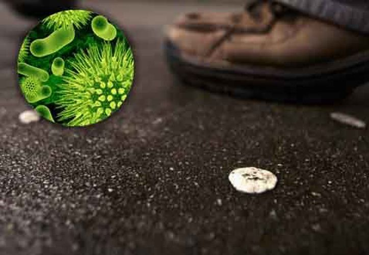El estudiante señaló que estos organismos microscópicos son muy poco conocidos en el país, pero pueden tener muchas aplicaciones. (Redacción/SIPSE).
