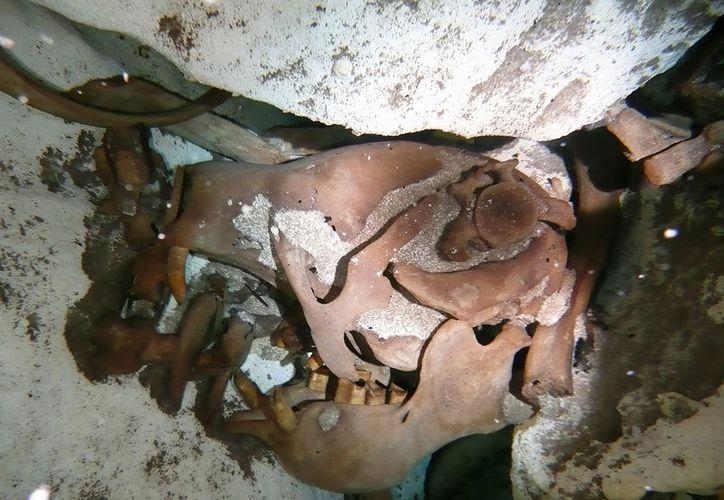 Arqueólogos encontraron el esqueleto a 50 metros bajo el agua en el cenote Zapote. (Foto: Internet)