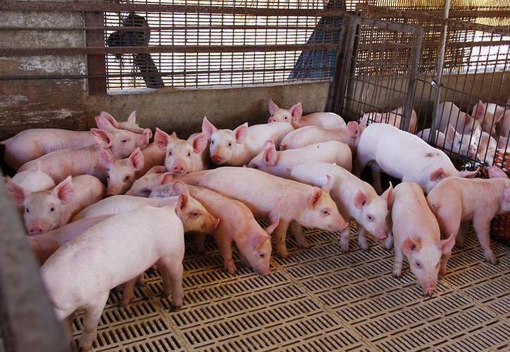 Con el avanzado procedimiento Three Site System, la carne para consumo queda libre de cualquier alteración hormonal. (Milenio Novedades)