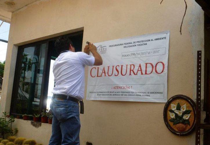 Las autoridades colocaron sellos de clausura en un vivero ubicado en el periférico de Mérida, por comerciar con especies protegidas, de las que no pudieron comprobar su legal procedencia. (Cortesía)