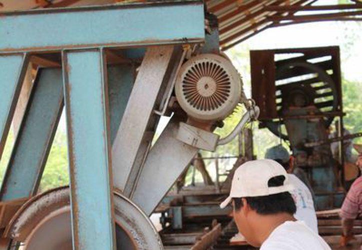 Los productores de madera del sur den Estado enfrentan problemas para económicos. (Harold Alcocer/SIPSE)