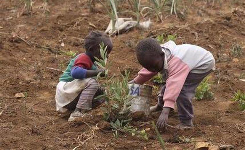 Niños salvan lo que resta de un cultivo de papa en el distrito Laikipia, Kenia, a unos 200 kilómetros. (Agencias)