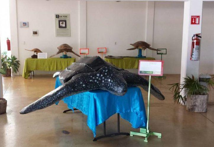 En la exposición se muestran replicas de tortugas marinas. (Foto/Planetario Cancún)
