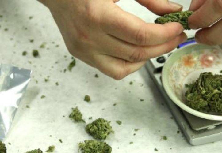 Uruguay se convirtió en el primer país del mundo en legalizar el cultivo y la venta de marihuana para uso recreativo. (Archivo/AP)