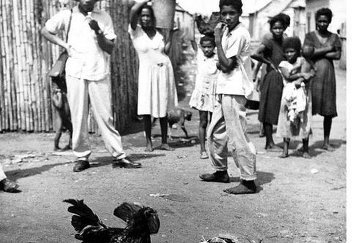 Pelea de gallos en la zona caribe de Colombia, entre 1930 y 1950. (Agencia Reforma)