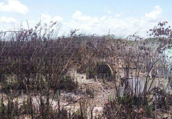 El fuego dañó grandes extensiones de manglar y selva. (Javier Ortiz/SIPSE)
