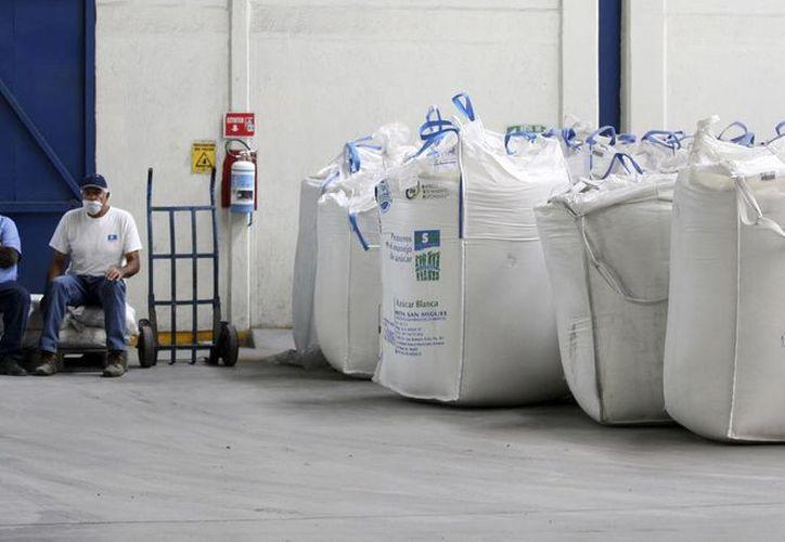 El precio final del producto se tendrá en octubre, cuando termine al 100% la zafra. (Carlos Castillo/SIPSE)