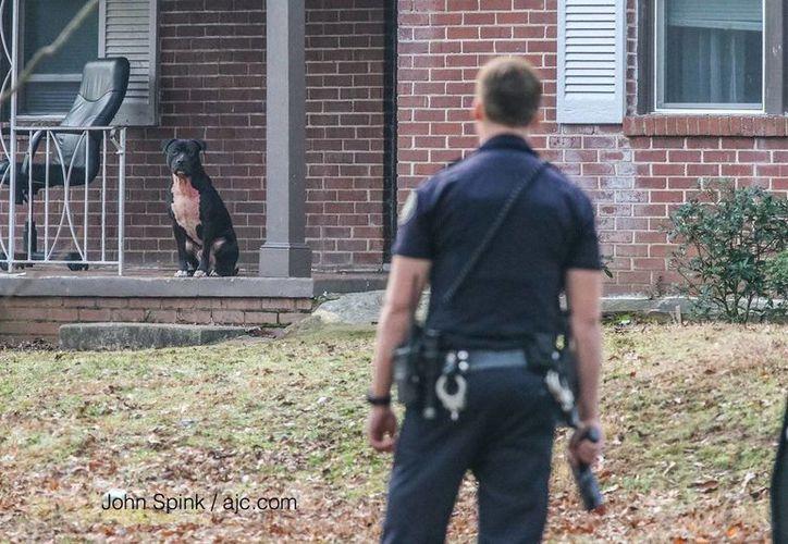 Imagen de un policía al intentar atrapar a uno de los dos perros pitbull que atacaron a unos niños en Atlanta. (@AudreyWSBTV)
