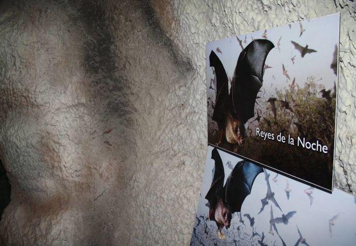 Se estableció que el 1 de junio es el Día del Murciélago. (Claudia Martín/SIPSE)