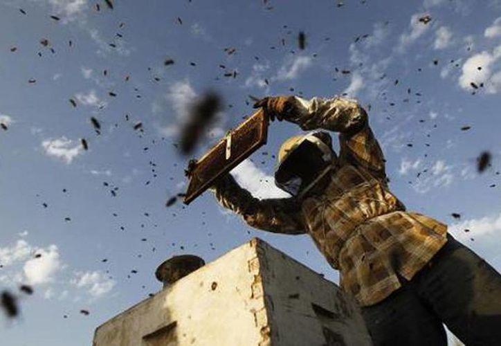 La actividad de apicultura tiene un profundo impacto económico. (newz.widmi.com)