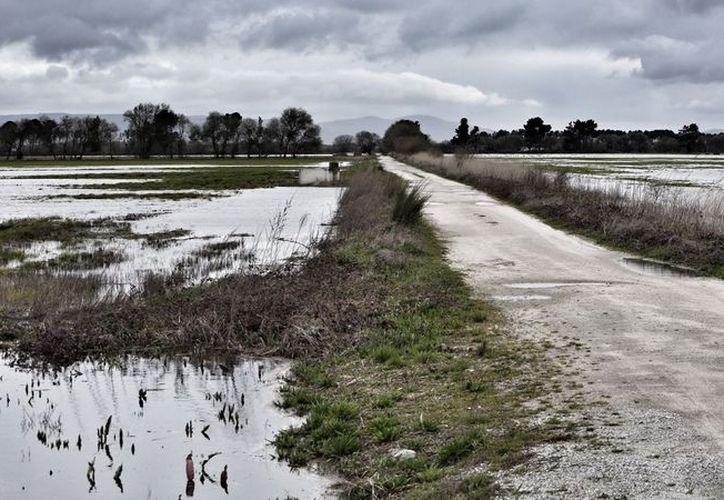 Cultivos que estaban en crecimiento se 'ahogaron', debido al exceso de agua provocado por las lluvias. (Carlos Castillo/SIPSE)