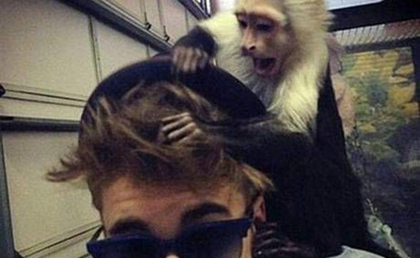 Justin Bieber con su mono capuchino. (independent.com.uk)