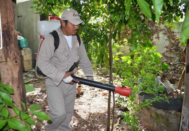 Pobladores piden la intervención de las autoridades sanitarias, para combatir los criaderos. (Javier Ortiz/SIPSE)