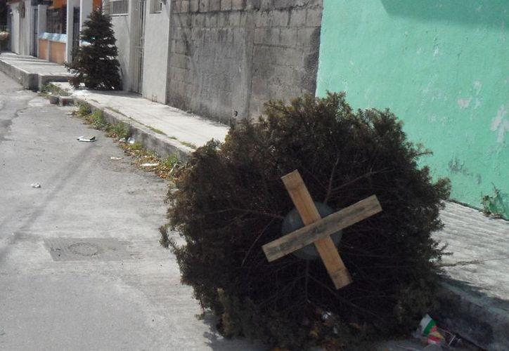 Ayuntamiento carece de equipo para deshacerse de los árboles navideños. (Julián Miranda/SIPSE)