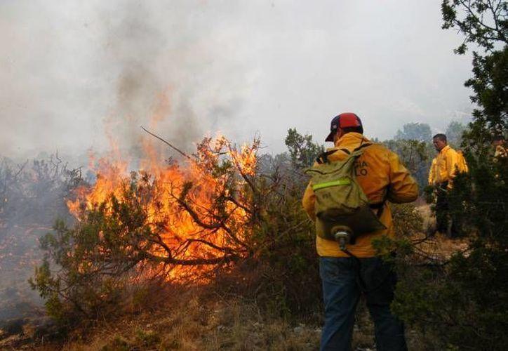 En 2015 se atendieron 81 incendios forestales en todo el Estado. (Redacción/SIPSE)
