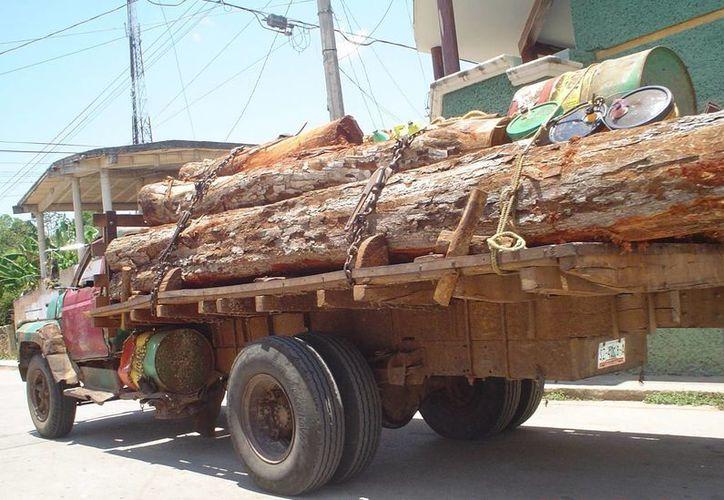 Se debe implementar un operativo permanente en las zonas de mayor tráfico de madera para evitar que sigan devastando las áreas verdes. (Carlos Yabur/SIPSE)