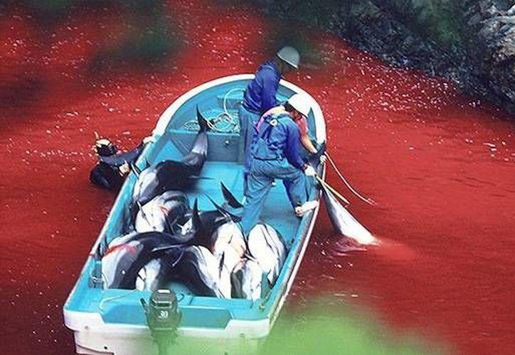 Los japoneses se defienden alegando que la carne de delfines y ballenas es una parte importante de su dieta desde hace siglos. (adventure-journal.com/RT)