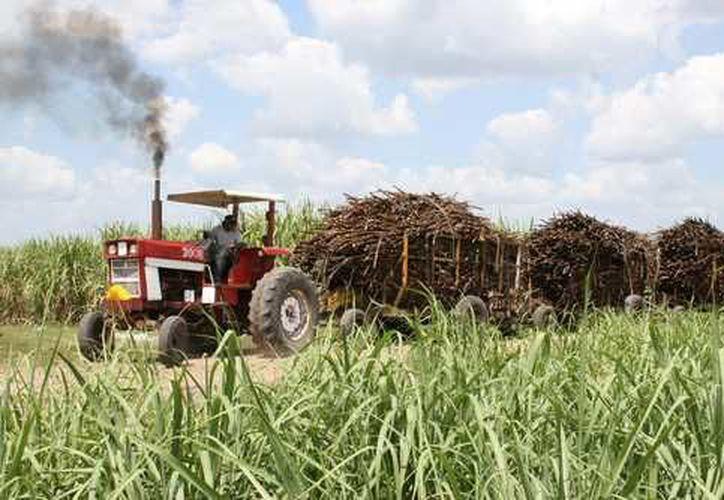 El pesticida es probado en campos alemanes para verificar su eficacia y seguridad (La Jornada)