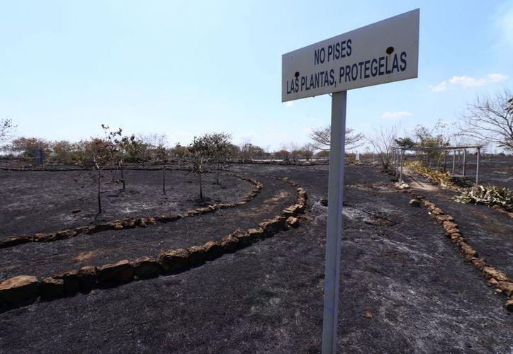 El incendio también consumió parte de un parque ecológico colindante. (Jorge Acosta/Milenio Novedades)