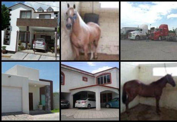 La PGR informó sobre el decomiso de nueve caballos cuarto de milla, más de una docena de vehículos y varias inmuebles a un grupo delictivo que serían los Zetas, en el estado de Coahuila. (Milenio digital)