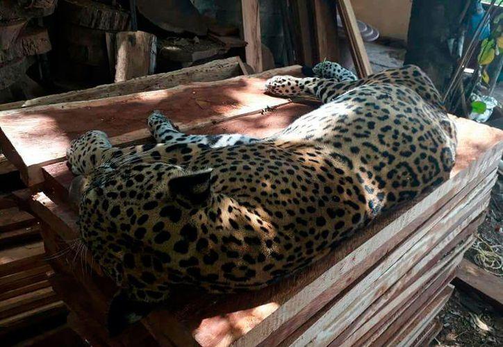 El caso ocurrió el pasado 29 de marzo en el municipio de Tulum. (Octavio Martínez/SIPSE)