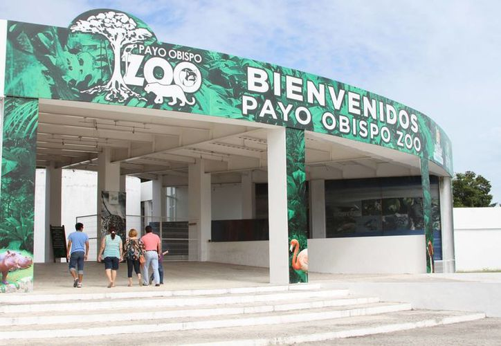 El Parque Zoológico, Payo Obispo pretende consolidar y diversificar sus áreas para recibir nuevas especies. (Harold Alcocer/SIPSE)