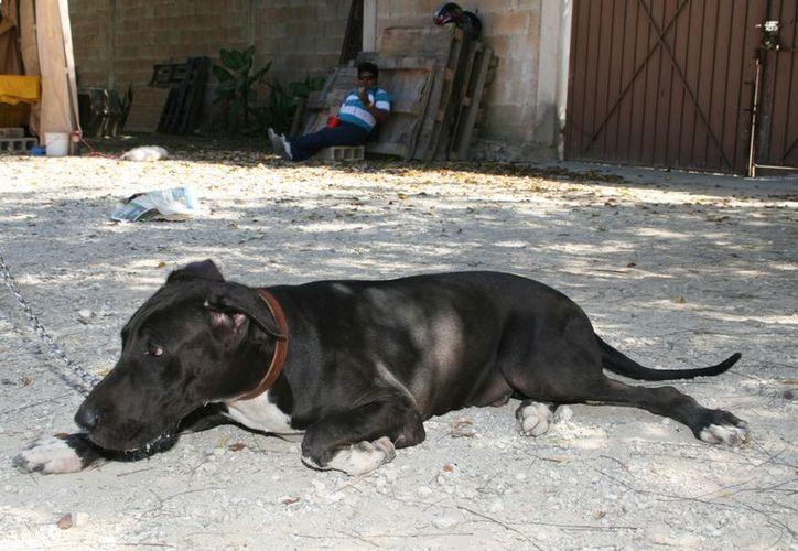 ADAY se pronuncia a favor de mantener responsablemente a los animales domésticos. (Guadalupe Adrián/SIPSE)