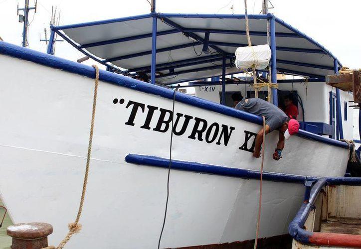 Pescadores realizan mejoras en sus embarcaciones para hacerse a la mar nuevamente, ya que este mes concluye la veda del mero en aguas yucatecas. (Milenio Novedades)