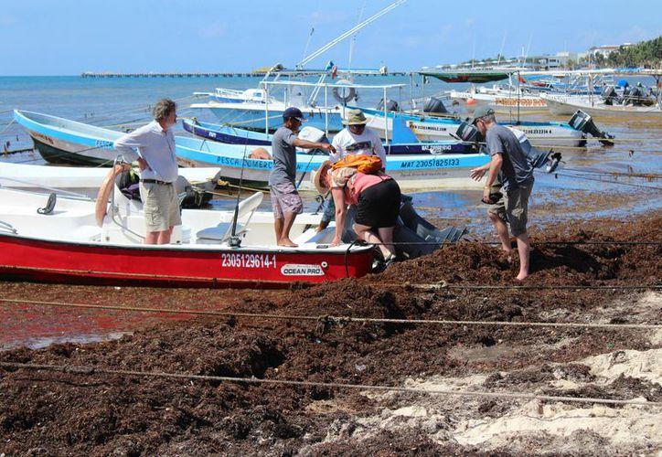 El sargazo que arriba a las costas de Playa del Carmen ahuyenta a ls mayoría de los turistas. (Foto: Adrián Barreto/SIPSE)