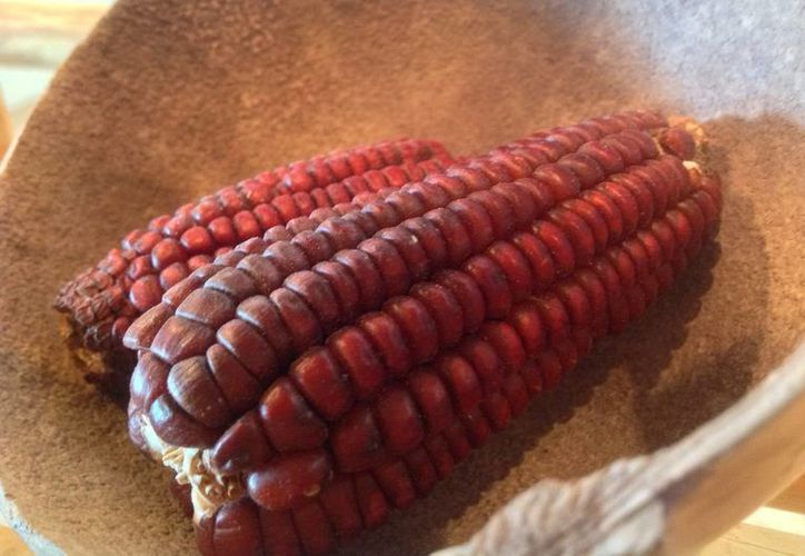 Aunque el suelo de Yucatán es de los más pobres de México, los mayas lograron cultivar diversas variedades de maíz y otras plantas. (Notimex)