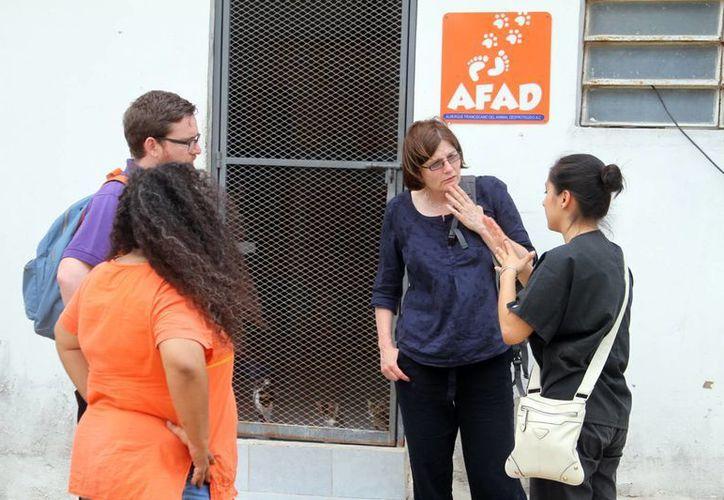 Personal de Dogs Trust realizó una visita a AFAD para conocer las actividades e instalaciones de la organización. (César González/SIPSE)