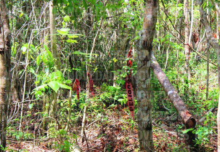 Autoridades verirficarán el terreno de Playa del Carmen habilitado para desarrollo habitacional, pero que tiene vestigios mayas, humedales y un cenote. (Fotos: Daniel Pacheco/SIPSE)