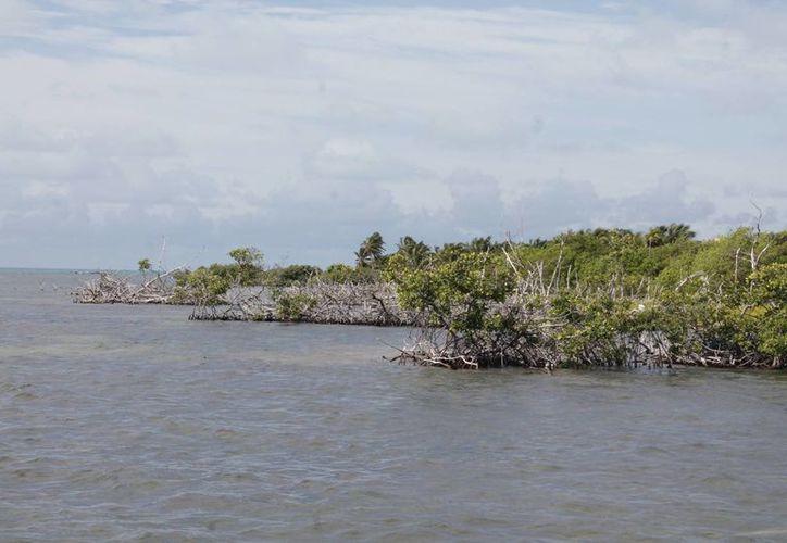 El 80% de las ANP de la región Península de Yucatán tiene planes de manejo publicados y vigentes. (Israel Leal/SIPSE)
