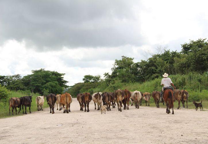 Desde octubre pasado, los productores pagaron la parte que les corresponde, pero hasta ahora no reciben el apoyo federal. (Carlos Castillo/SIPSE)