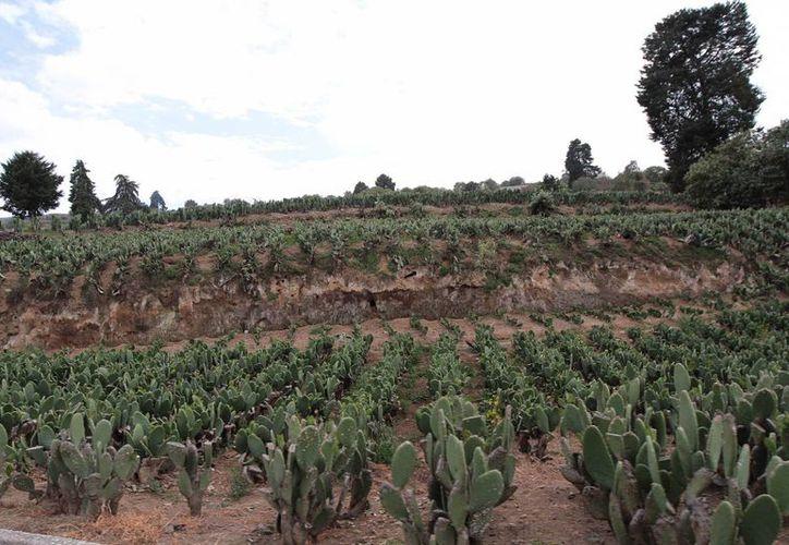 La diversidad de los suelos favorece la práctica de diferentes tipos de sistemas agrícolas y una amplia gama de productos que se obtienen de ellos. (Archivo/Notimex)