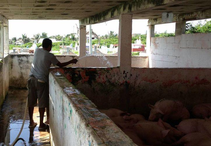 Los trabajadores causan escándalo en el rastro municipal. (Lanrry Parra/SIPSE)