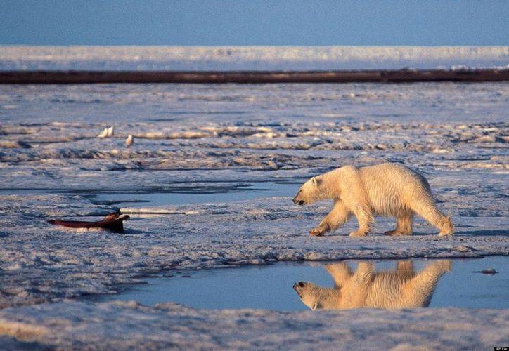 La comunidad científica reconoce que el deshielo del Ártico es inevitable. Sus opiniones difieren solo en cuánto tiempo tardará en hacerlo. (Agencias)