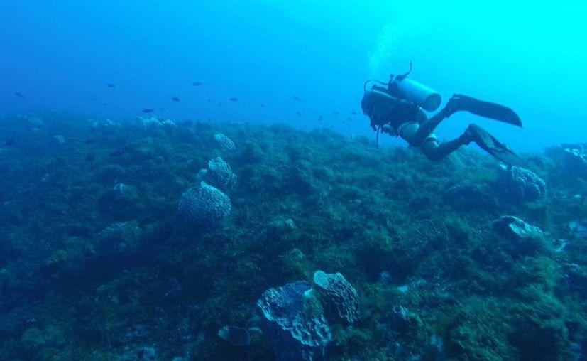 El Área Natural Protegida de Puerto Morelos fue seleccionada para ingresar a la 'Lista Verde'. (Israel Leal/SIPSE)