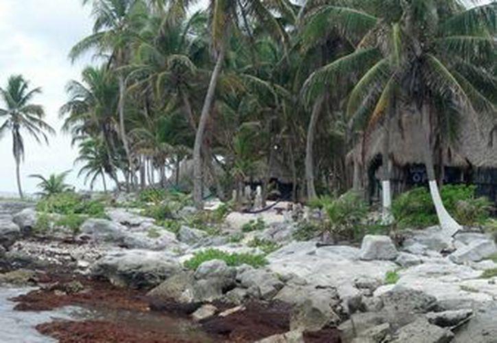 Las playas de Tulum lucen oscurecidas por el sargazo acumulado. (Sara Cauich/SIPSE)