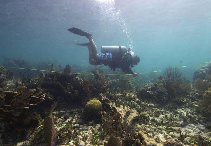 El buceo es una de las prácticas que amenazan a los arrecifes del estado. (Archivo/SIPSE)