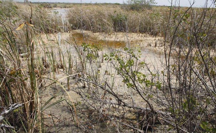 Tratan de recuperar un paisaje ambiental de alta calidad. (Archivo/SIPSE)