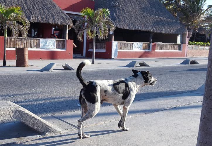 Se calcula que hay unos 50 mil perros callejeros en todo el Estado. (Milenio Novedades)